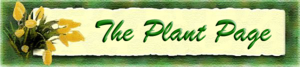 Alwynne B. Beaudoin - The Plant Page